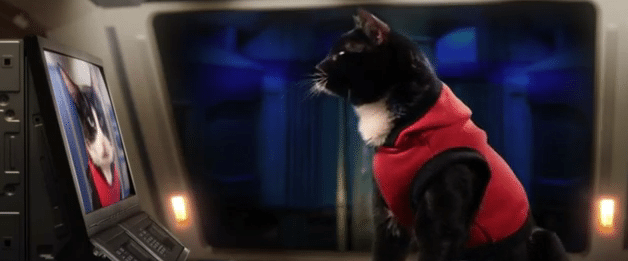 film reviews | movies | features | BRWC Cats In Space - Short