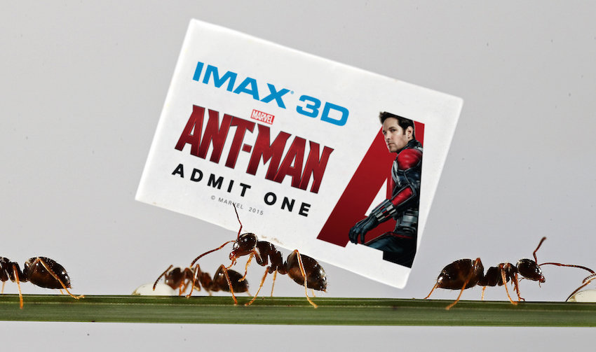 film reviews | movies | features | BRWC ANT-SIZED CINEMA TICKETS HIDDEN ACROSS THE UK