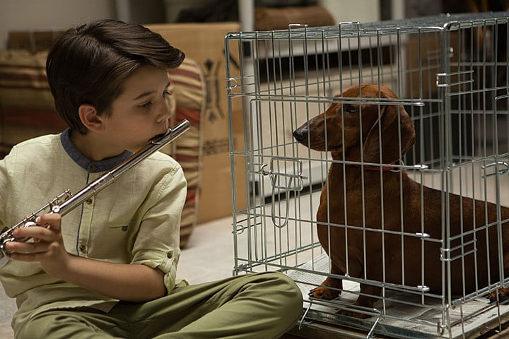 film reviews | movies | features | BRWC The BRWC Review: Wiener-Dog