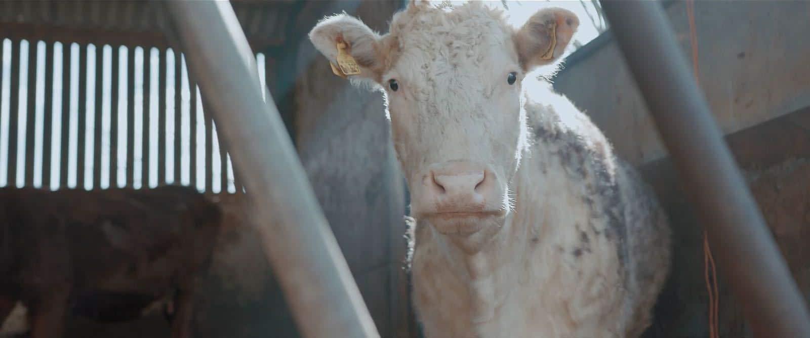 73 Cows: BAFTA Winning Short Film